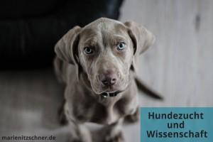 Hundezucht und Wissenschaft (Tagesseminar)